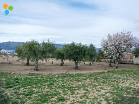 Terreno com árvores de fruto