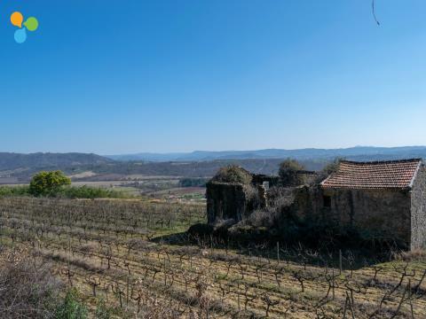 Terreno Rústico Com Vinha Instalada