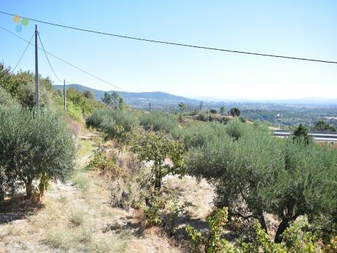 Quinta - Alpedrinha