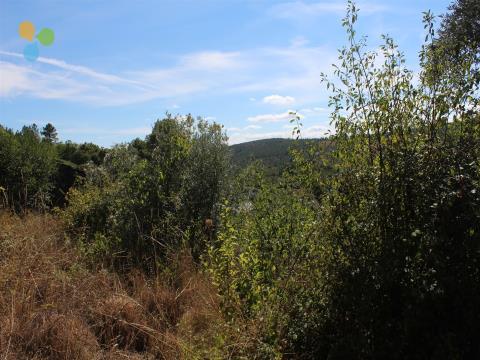 Terreno Rústico - Unhais da Serra