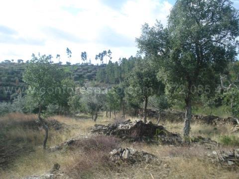Rustico Terreno