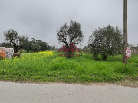 Terreno Misto