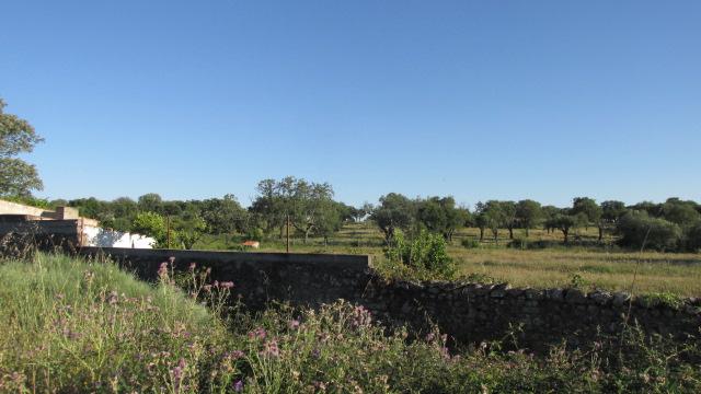 Farm T2