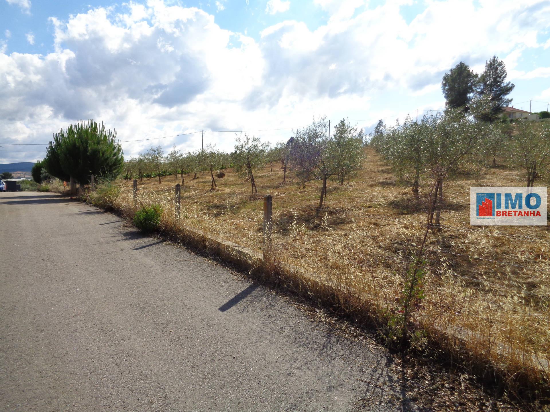 Lote de Terreno Agricola  - Dominguiso