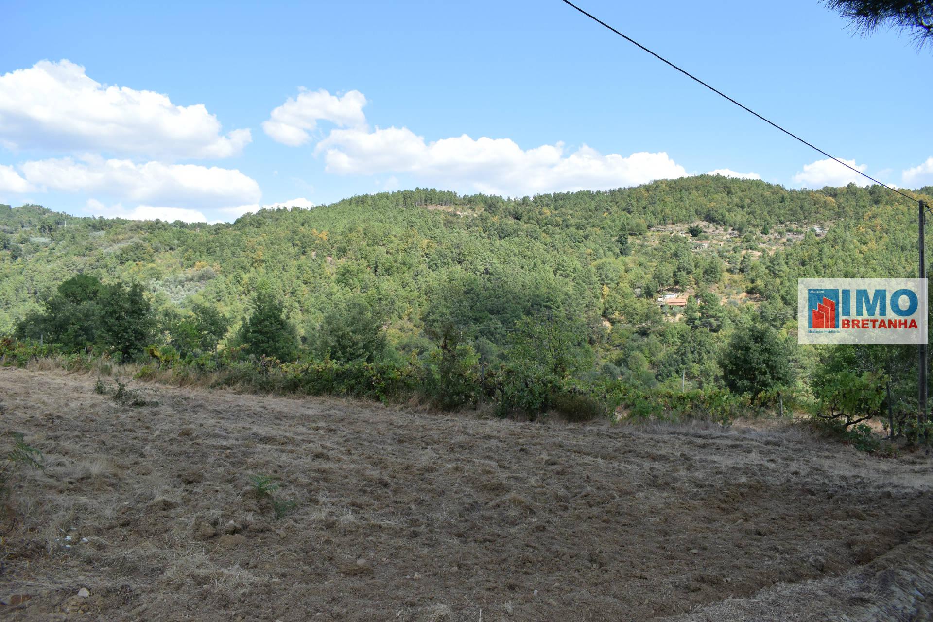 Quinta - Atalaia do Teixoso