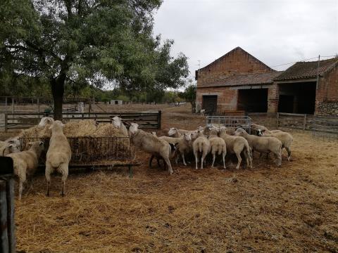 COUNTRY COTTAGE VALE NORTE - Ready for production - Alcáçovas - Viana do Alentejo - Évora