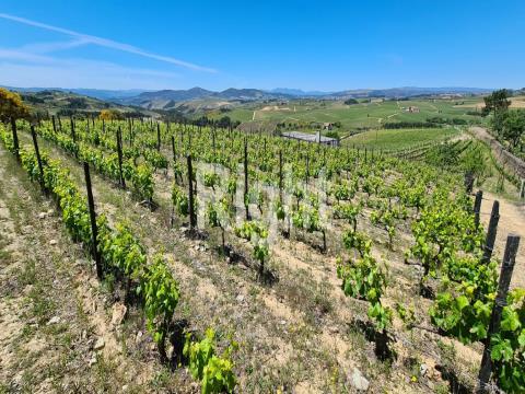 Quinta no Douro para produção de vinho