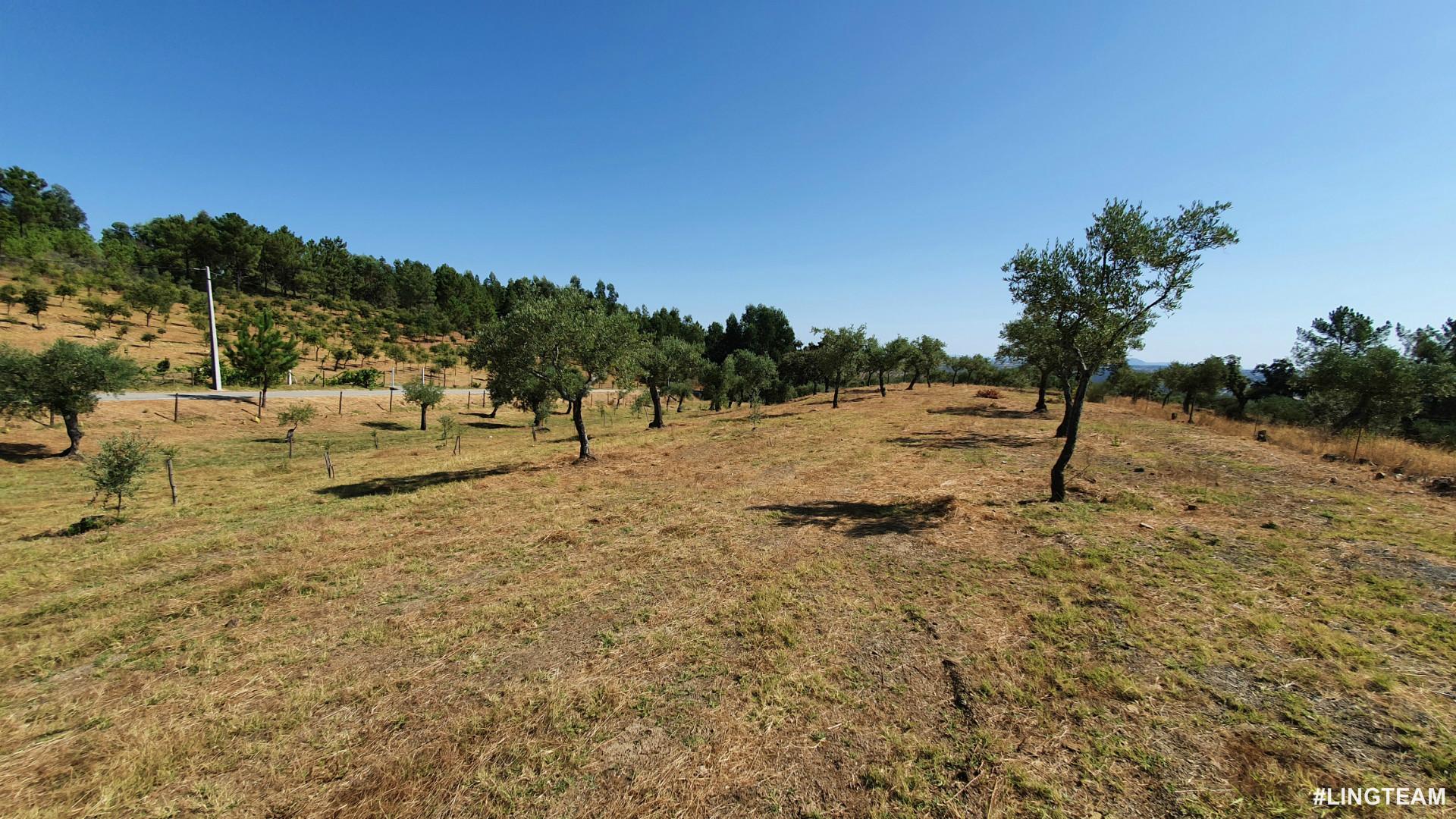 Farm T1