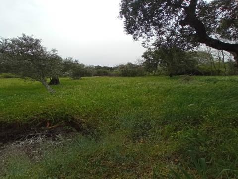Terreno Misto T2