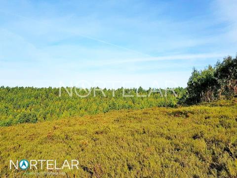 Terreno florestal em Fradelos