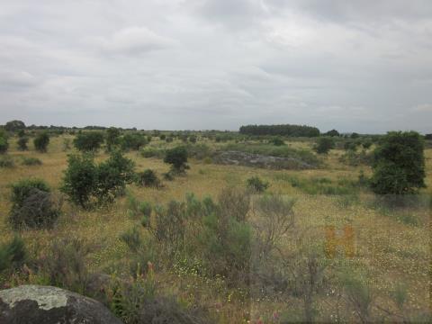 Venda terreno com 16 ha. a 5 km de Castelo Branco