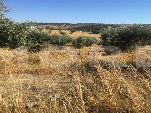 Terreno Rústico - Alqueva - Portel, Évora, Portel