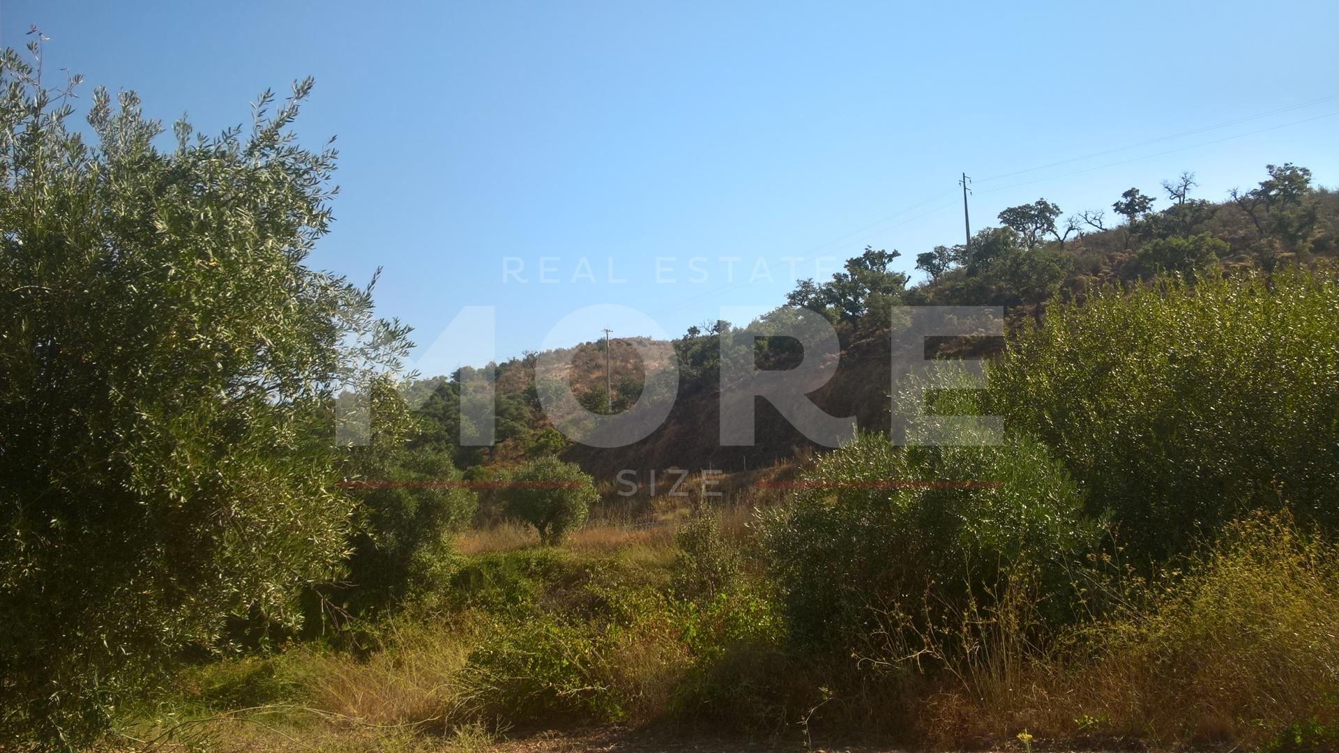 img_Herdade  com 88 hectares Portel/Évora