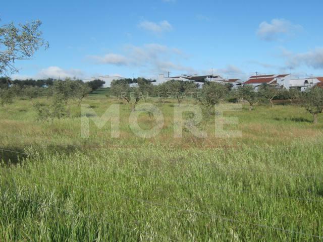 img_Real estate land