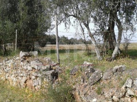 Terreno Alcáçovas