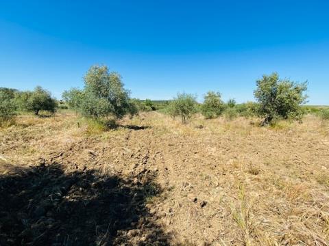Terreno com 6,2 hectares