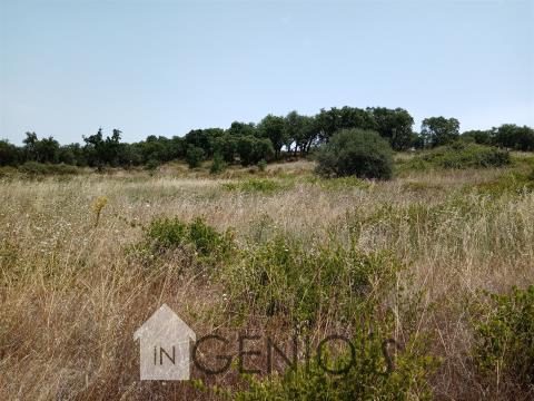 Terreno Rústico em Cabeção,  Mora