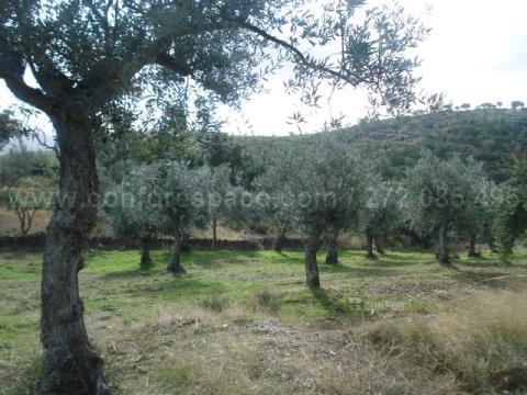Landgrundstück