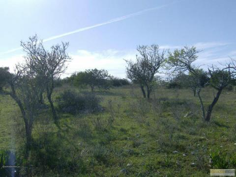 Magnifica terra per progetto agricolo