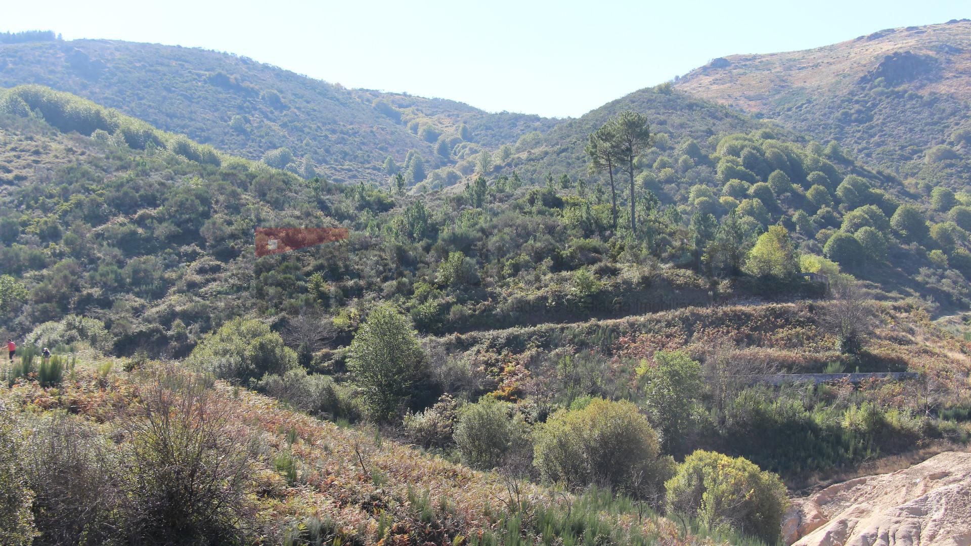Terrain rural