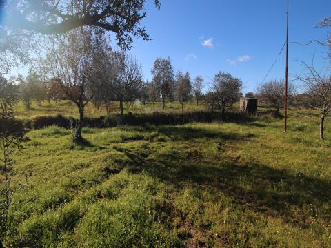 Small Farm T4+2