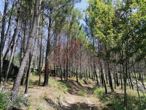 Terreno agrícola em Cabeceiras de Basto, Refojos de Basto, Outeiro e Painzela