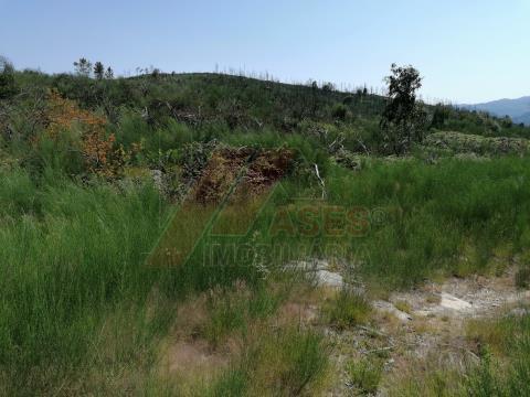 Terreno florestal em Pedraça, Cabeceiras de Basto