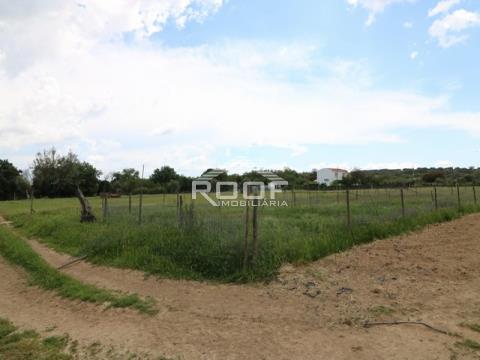Farm T3+1