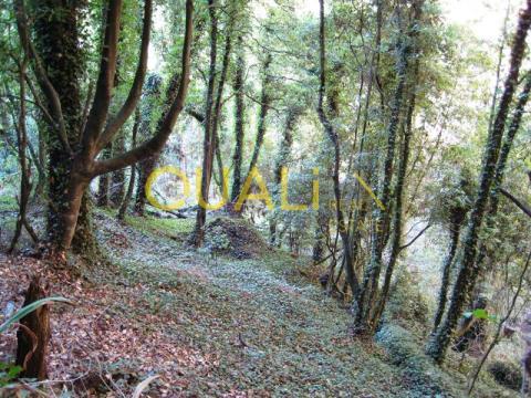 Terreno agrícola isolado na Camacha para venda.