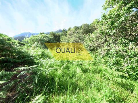 Terreno Rústico em Machico - Madeira - € 27.500,00