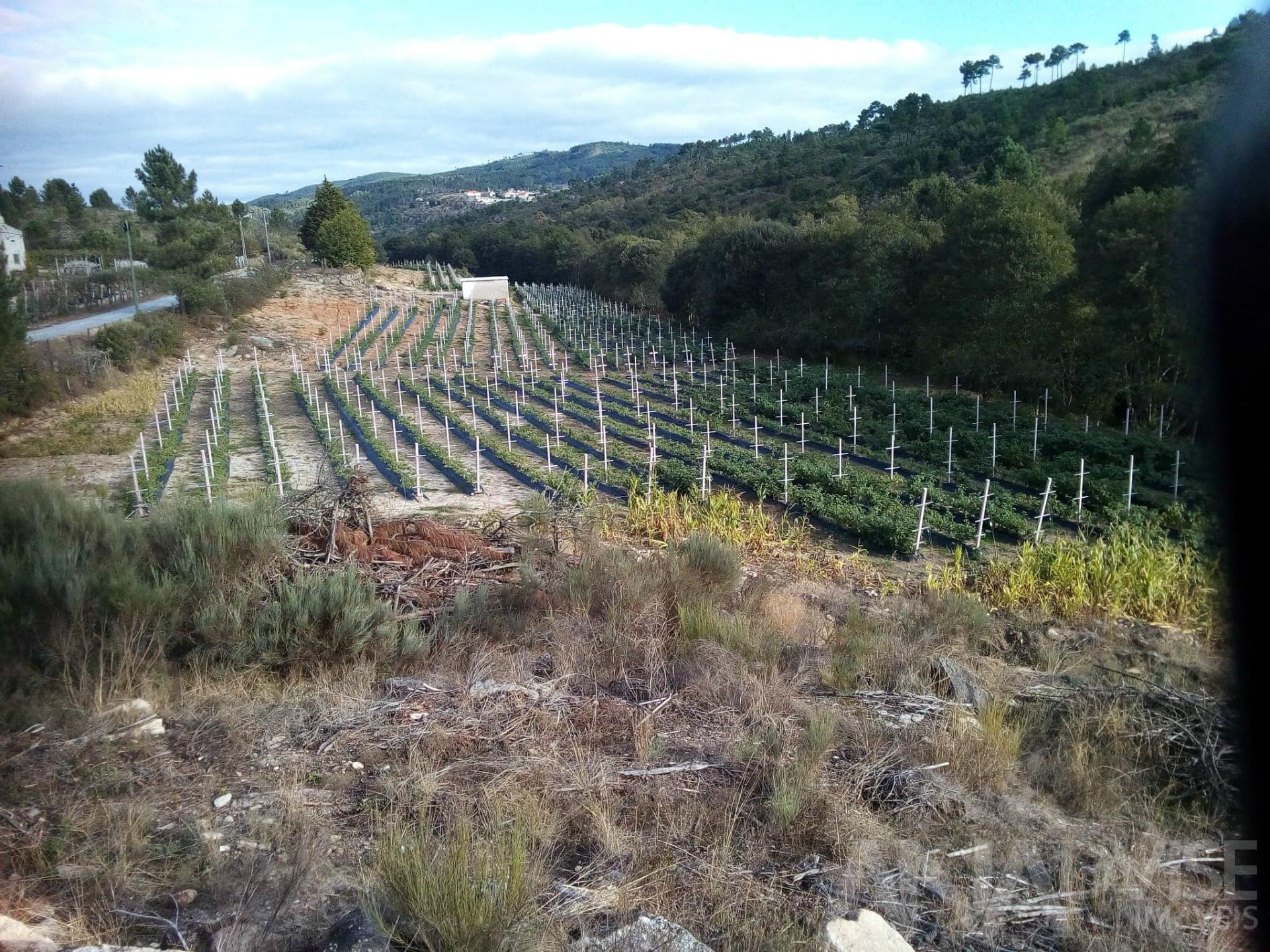 Les producteurs de vin Cave