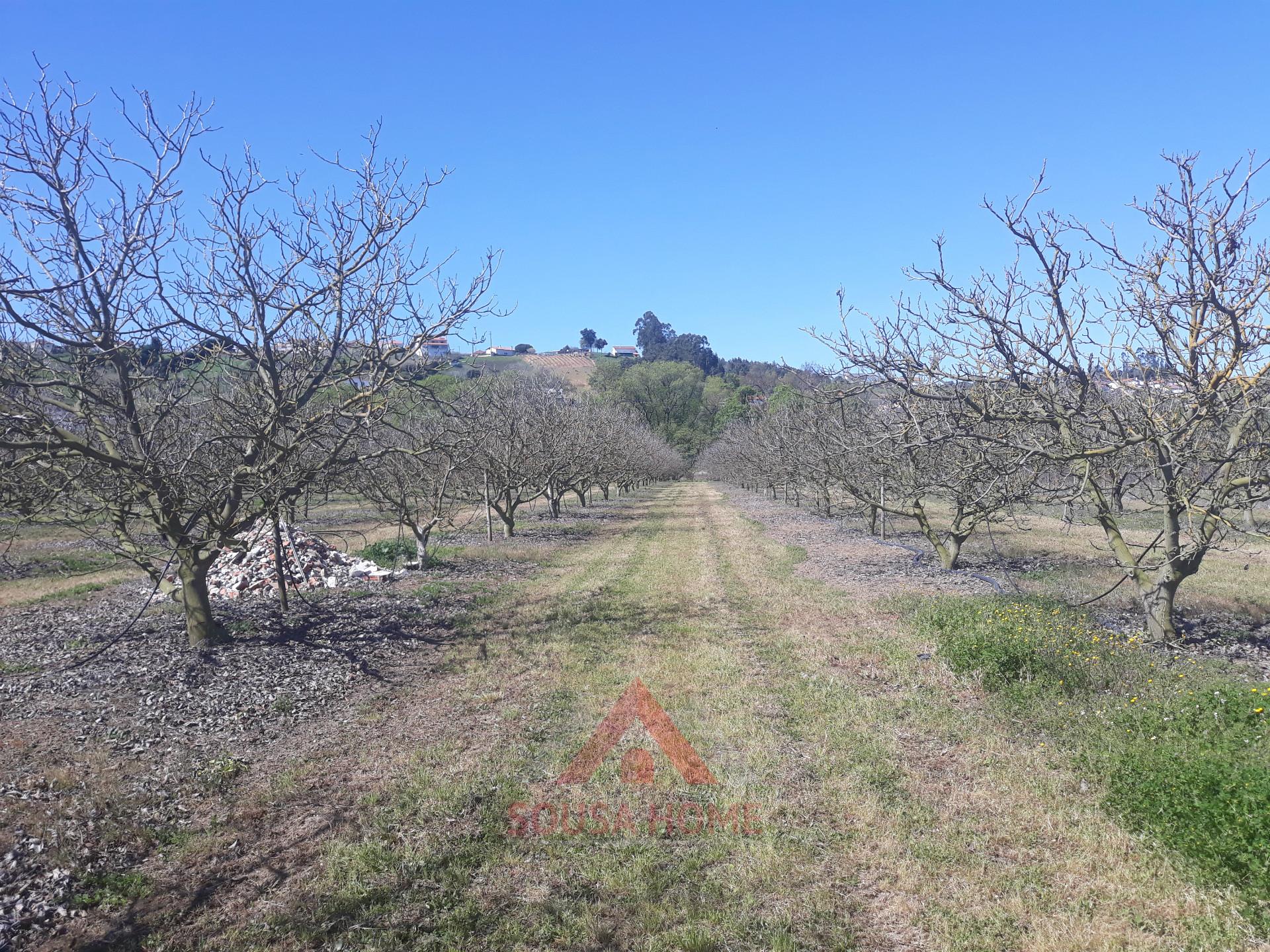Quinta - Cortes - Leiria