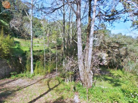 Farm inserted in the Natural Park of Sintra, consisting of 2 houses and 2,400m² of land