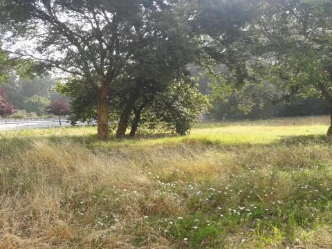 Terreno p/ moradia em São M. de Infesta