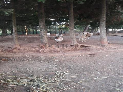 Small Farm T2