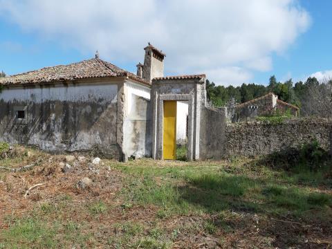 Quinta T6